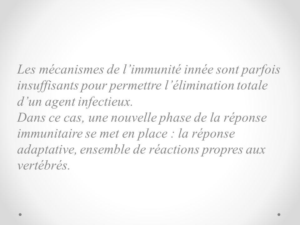 Les mécanismes de limmunité innée sont parfois insuffisants pour permettre lélimination totale dun agent infectieux. Dans ce cas, une nouvelle phase d