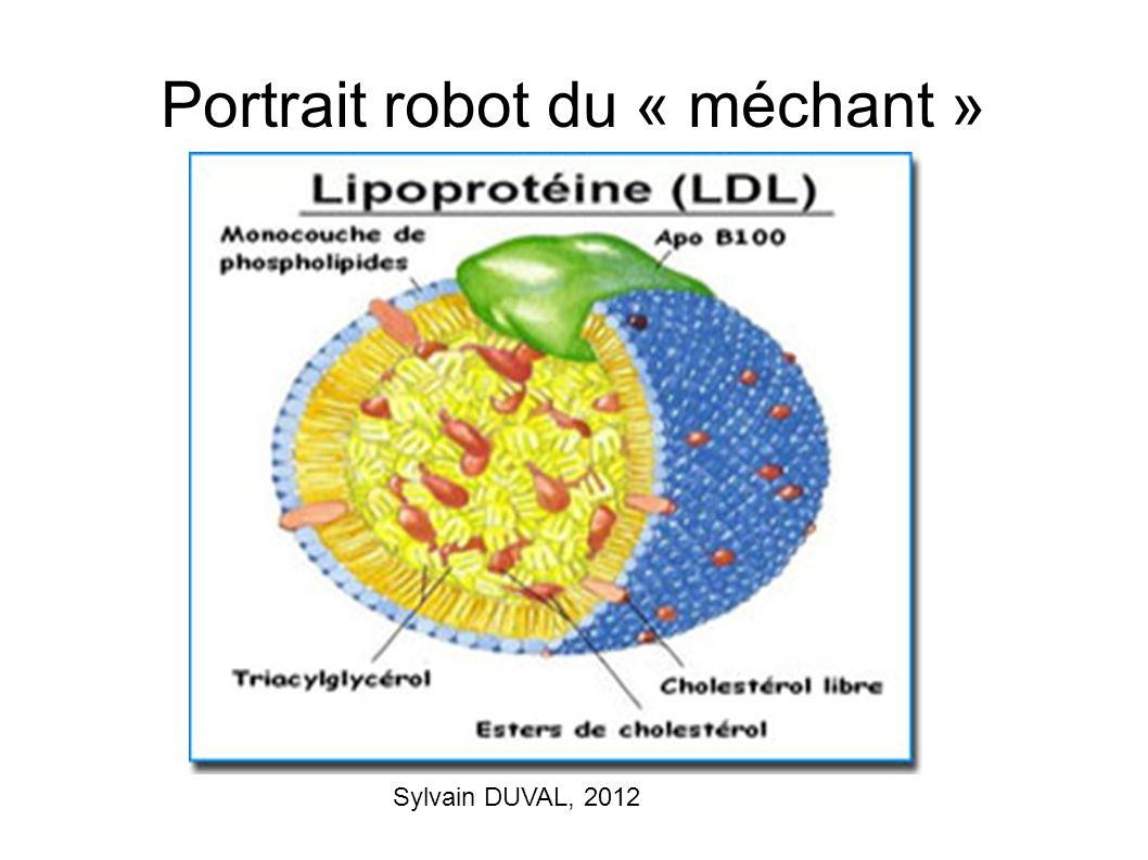 Portrait robot du « méchant » Sylvain DUVAL, 2012