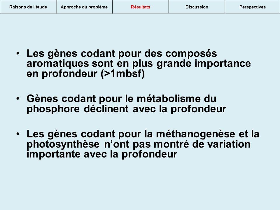 Les gènes codant pour des composés aromatiques sont en plus grande importance en profondeur (>1mbsf) Gènes codant pour le métabolisme du phosphore déclinent avec la profondeur Les gènes codant pour la méthanogenèse et la photosynthèse nont pas montré de variation importante avec la profondeur Raisons de létudeApproche du problèmeRésultatsDiscussionPerspectives