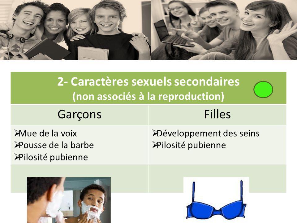 2- Caractères sexuels secondaires (non associés à la reproduction) GarçonsFilles Mue de la voix Pousse de la barbe Pilosité pubienne Développement des