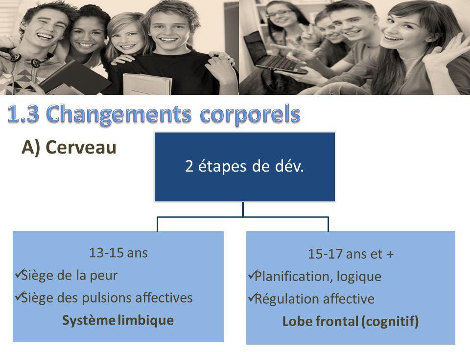 A) Cerveau 2 étapes de dév. 13-15 ans Siège de la peur Siège des pulsions affectives Système limbique 15-17 ans et + Planification, logique Régulation
