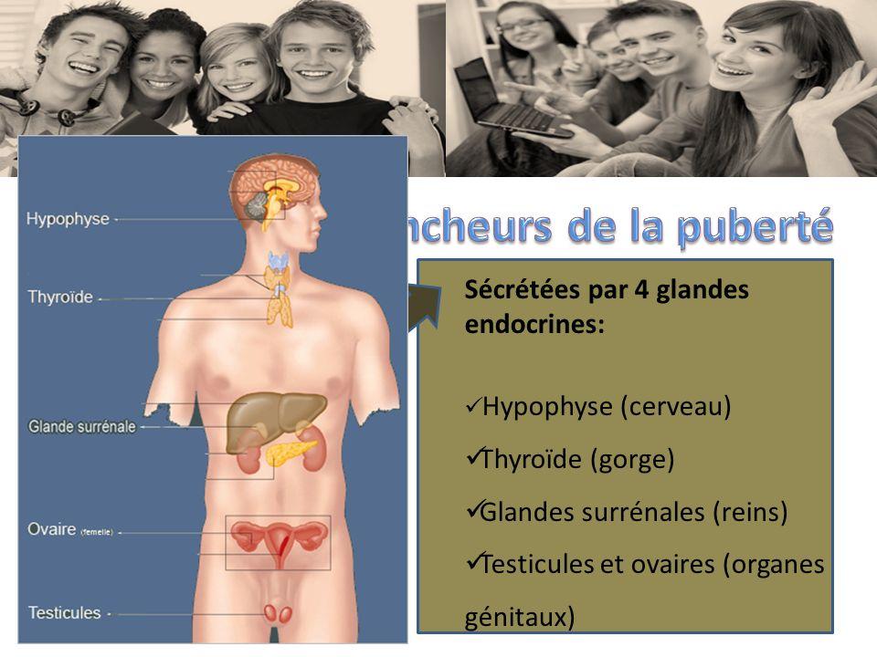 Gain de poids rapide Alimentation Activité physique Hérédité Hormones Sécrétées par 4 glandes endocrines: Hypophyse (cerveau) Thyroïde (gorge) Glandes