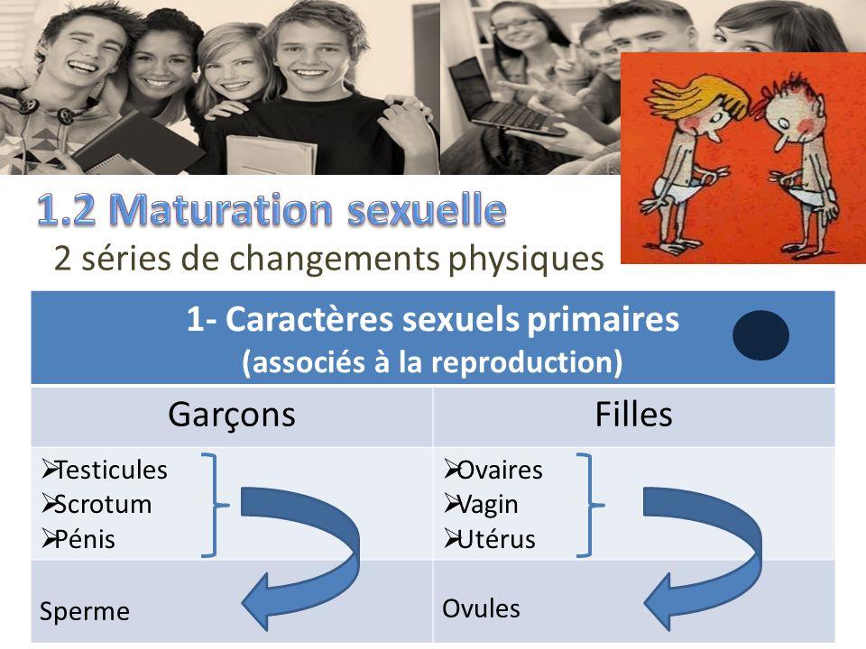 2 séries de changements physiques 1- Caractères sexuels primaires (associés à la reproduction) GarçonsFilles Testicules Scrotum Pénis Ovaires Vagin Ut