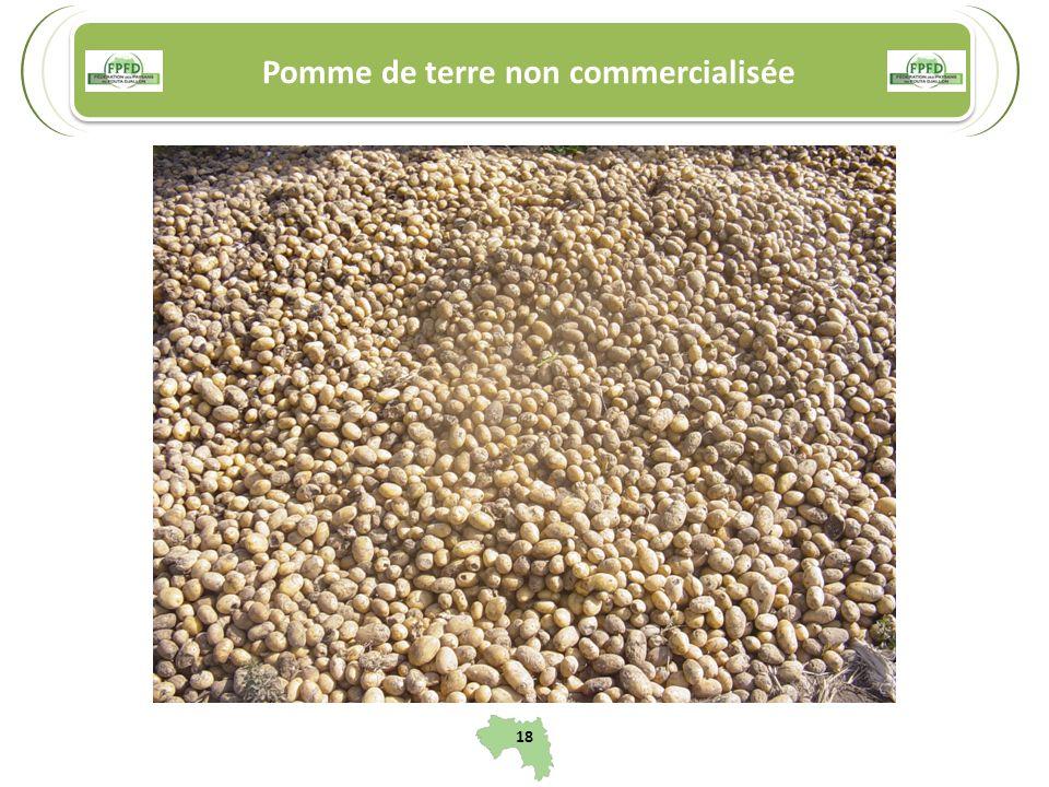 Pomme de terre non commercialisée 18