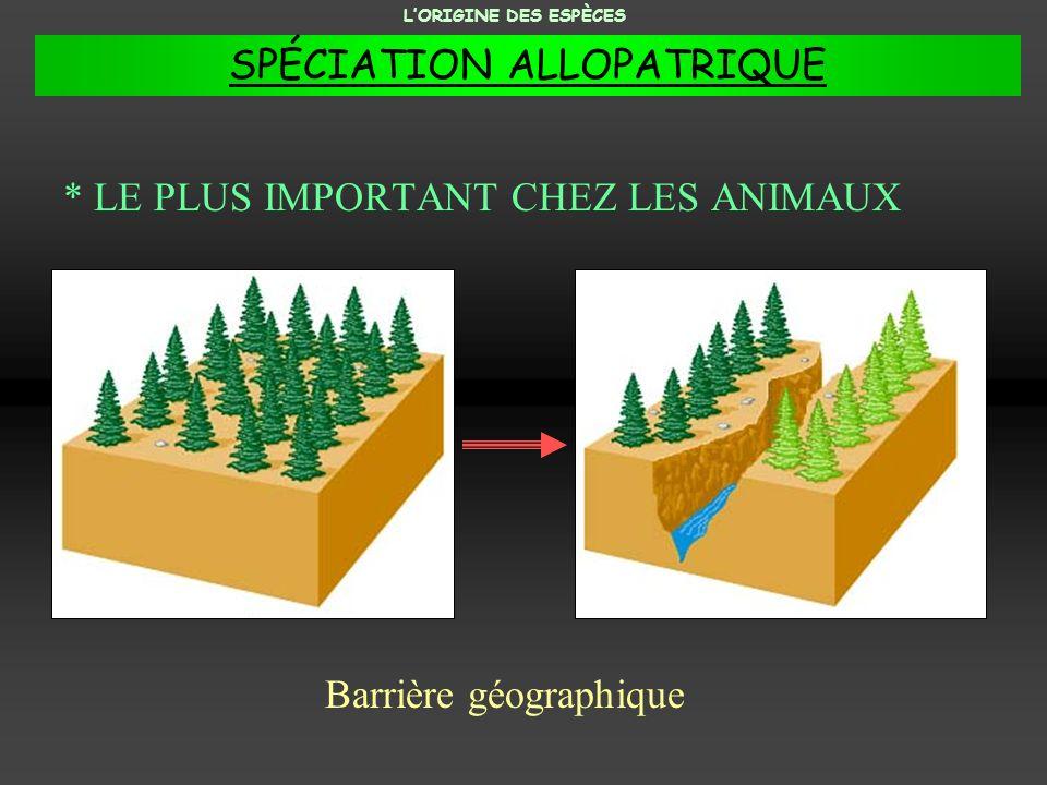 * LE PLUS IMPORTANT CHEZ LES ANIMAUX Barrière géographique LORIGINE DES ESPÈCES SPÉCIATION ALLOPATRIQUE