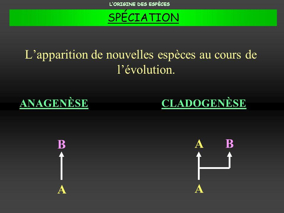 Lapparition de nouvelles espèces au cours de lévolution. ANAGENÈSECLADOGENÈSE A A A B B LORIGINE DES ESPÈCES SPÉCIATION