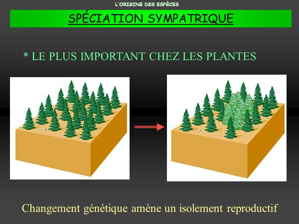 * LE PLUS IMPORTANT CHEZ LES PLANTES Changement génétique amène un isolement reproductif LORIGINE DES ESPÈCES SPÉCIATION SYMPATRIQUE