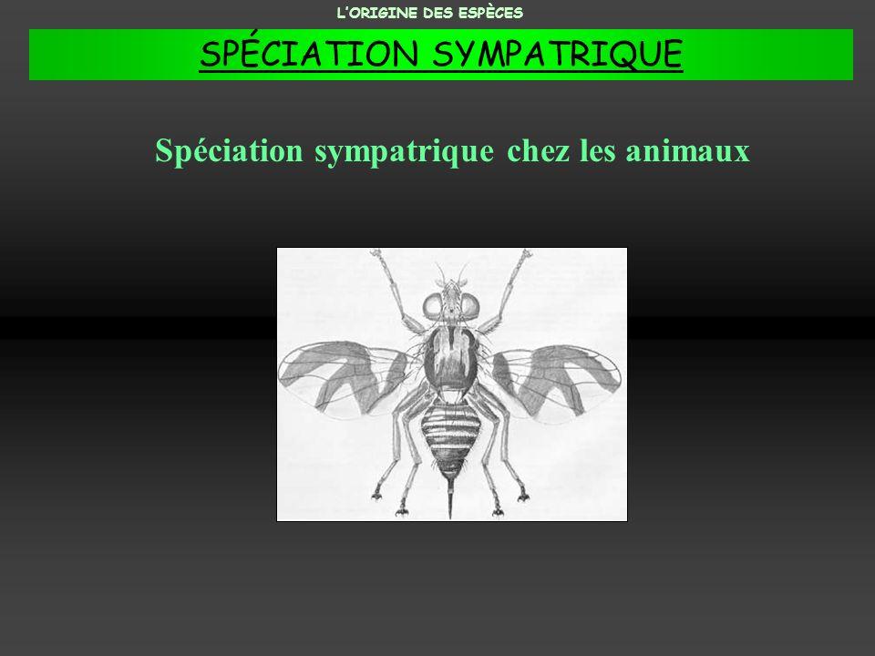 Spéciation sympatrique chez les animaux LORIGINE DES ESPÈCES SPÉCIATION SYMPATRIQUE