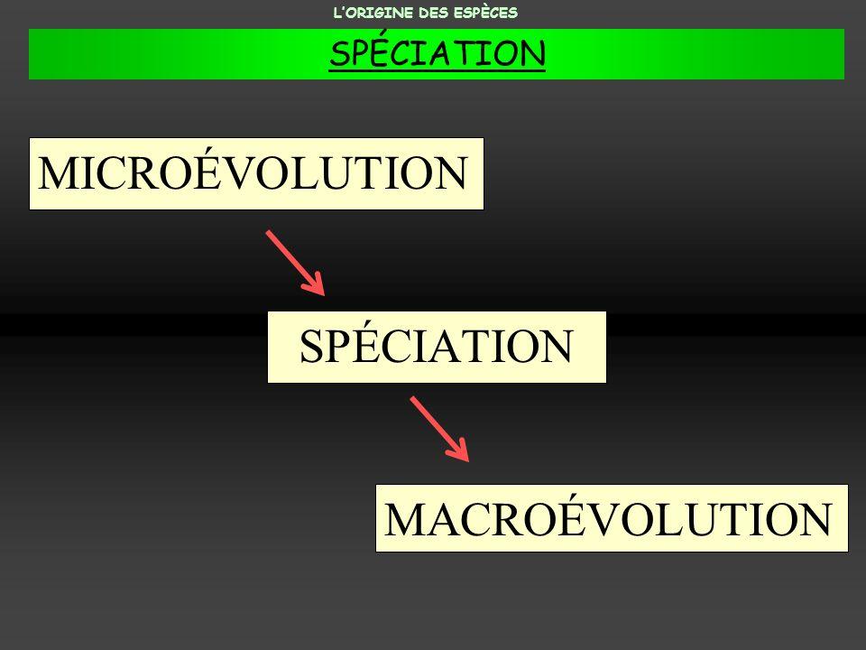 MICROÉVOLUTION SPÉCIATION MACROÉVOLUTION LORIGINE DES ESPÈCES SPÉCIATION