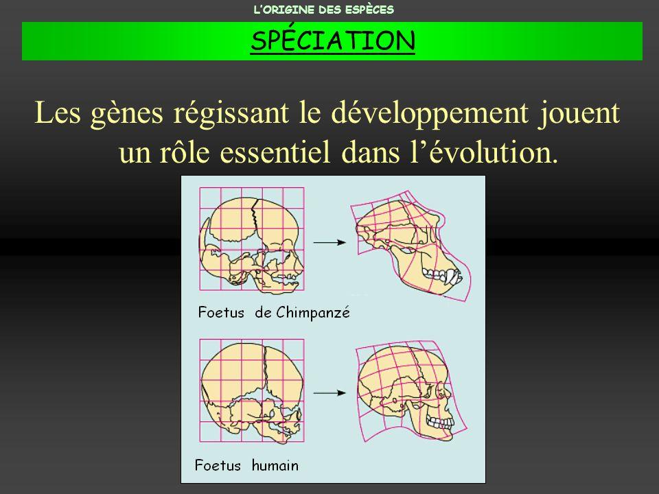 Les gènes régissant le développement jouent un rôle essentiel dans lévolution. LORIGINE DES ESPÈCES SPÉCIATION