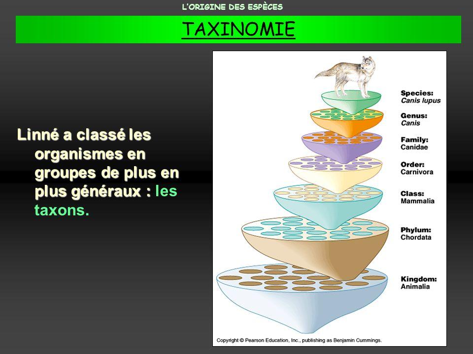 Linné a classé les organismes en groupes de plus en plus généraux : Linné a classé les organismes en groupes de plus en plus généraux : les taxons. LO