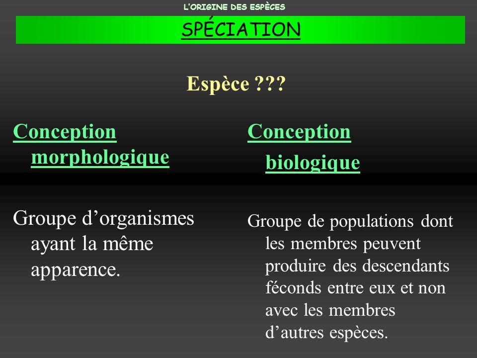 ORDRE : Carnivores Un exemple du principe de la classification LORIGINE DES ESPÈCES