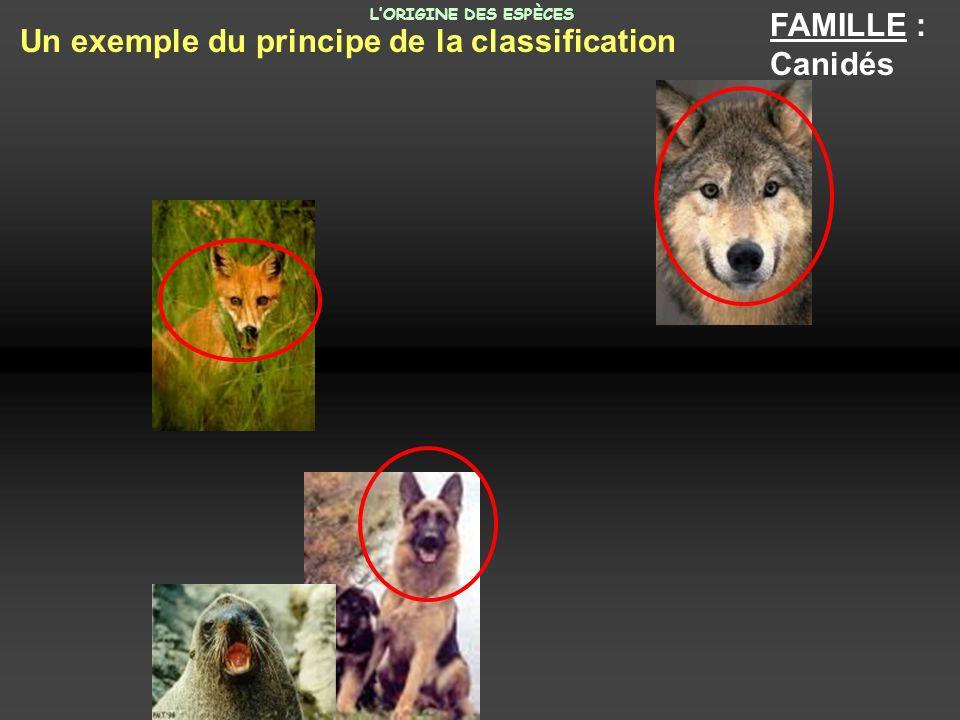 FAMILLE : Canidés Un exemple du principe de la classification LORIGINE DES ESPÈCES