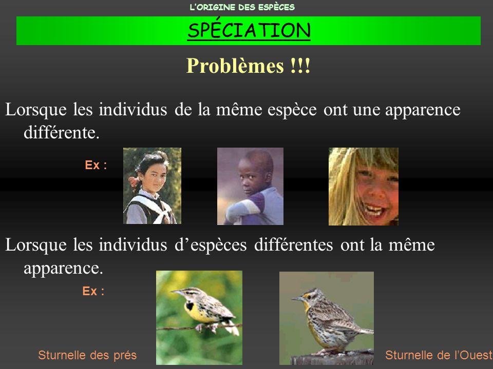 Lorsque les individus de la même espèce ont une apparence différente. Lorsque les individus despèces différentes ont la même apparence. Problèmes !!!