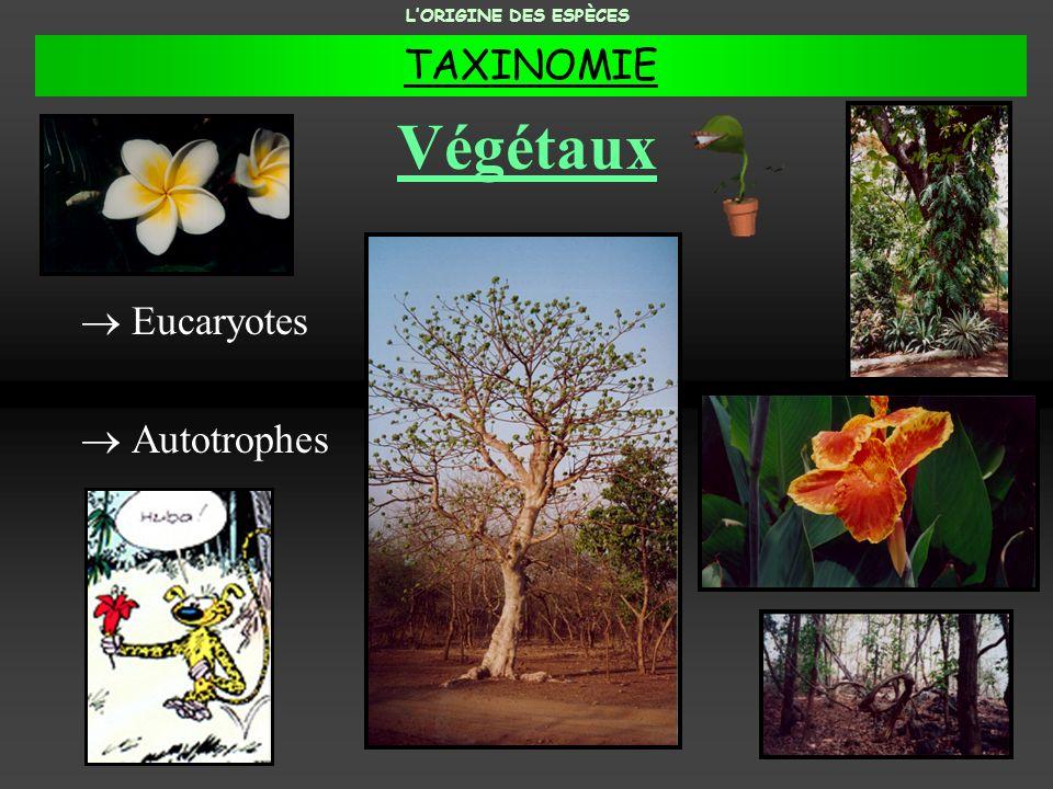 Végétaux Eucaryotes Autotrophes LORIGINE DES ESPÈCES TAXINOMIE