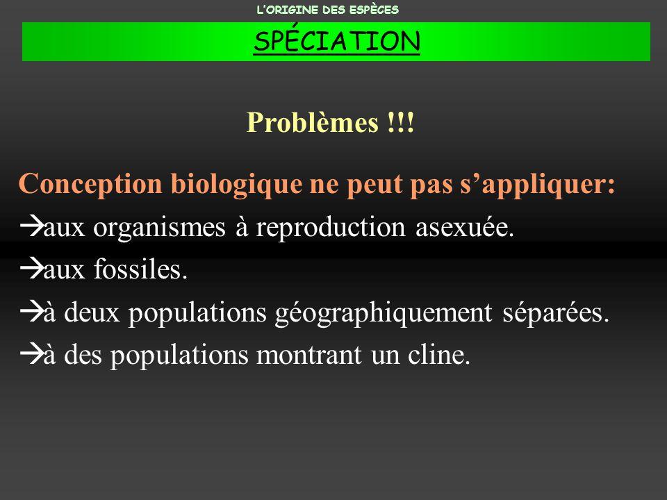 Conception biologique ne peut pas sappliquer: aux organismes à reproduction asexuée. aux fossiles. à deux populations géographiquement séparées. à des