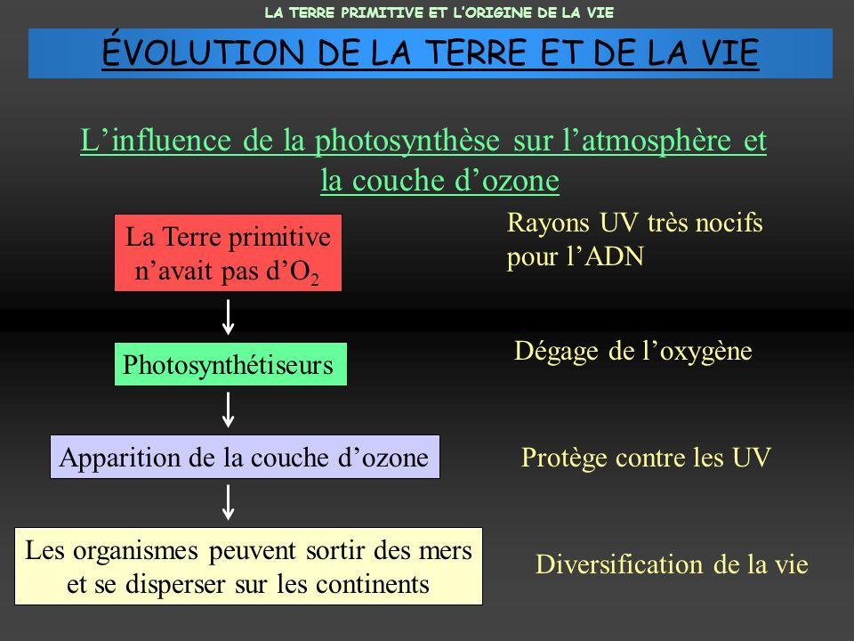 Linfluence de la photosynthèse sur latmosphère et la couche dozone Photosynthétiseurs Apparition de la couche dozone Les organismes peuvent sortir des
