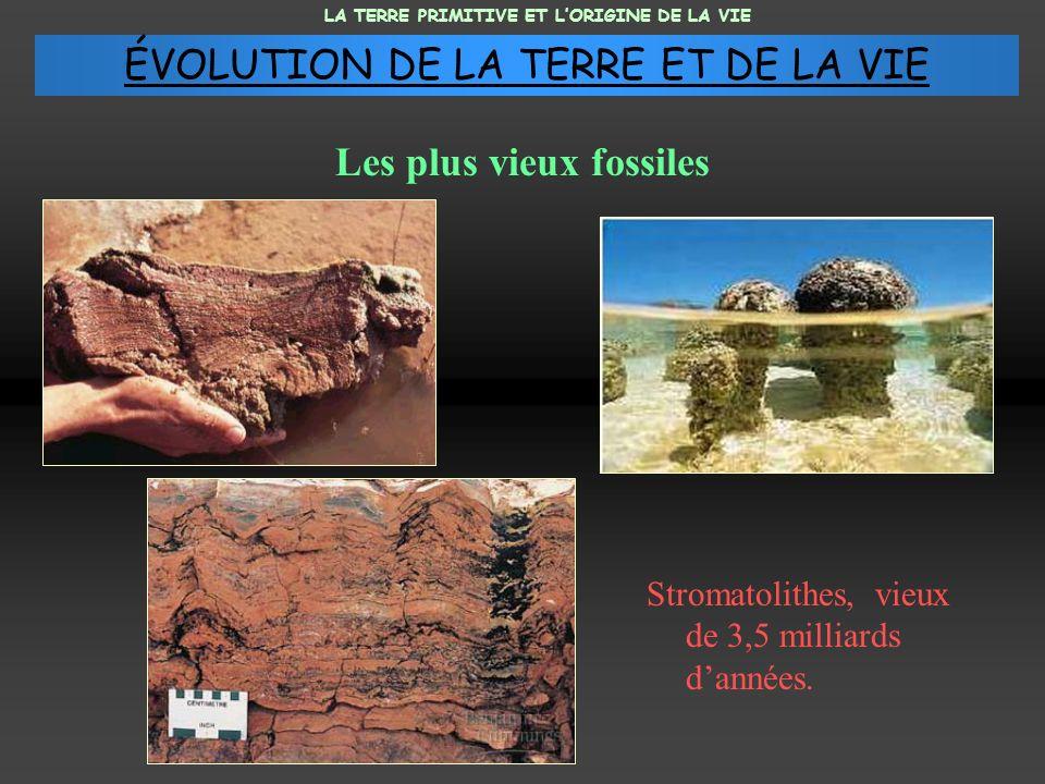 Les plus vieux fossiles Stromatolithes, vieux de 3,5 milliards dannées. LA TERRE PRIMITIVE ET LORIGINE DE LA VIE ÉVOLUTION DE LA TERRE ET DE LA VIE