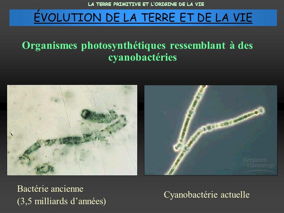 Organismes photosynthétiques ressemblant à des cyanobactéries Bactérie ancienne (3,5 milliards dannées) Cyanobactérie actuelle LA TERRE PRIMITIVE ET L