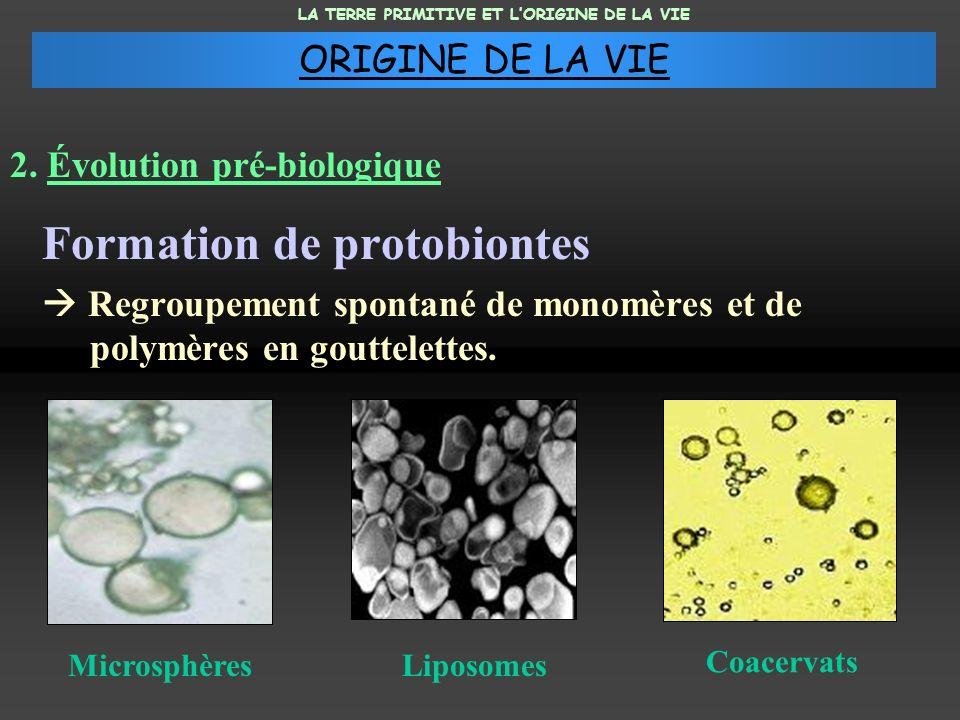 2. Évolution pré-biologique Formation de protobiontes Regroupement spontané de monomères et de polymères en gouttelettes. MicrosphèresLiposomes Coacer