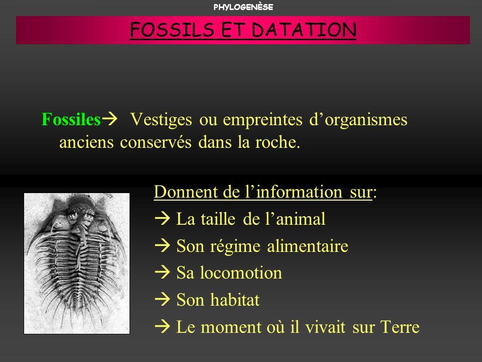 Fossiles Vestiges ou empreintes dorganismes anciens conservés dans la roche. Donnent de linformation sur: La taille de lanimal Son régime alimentaire