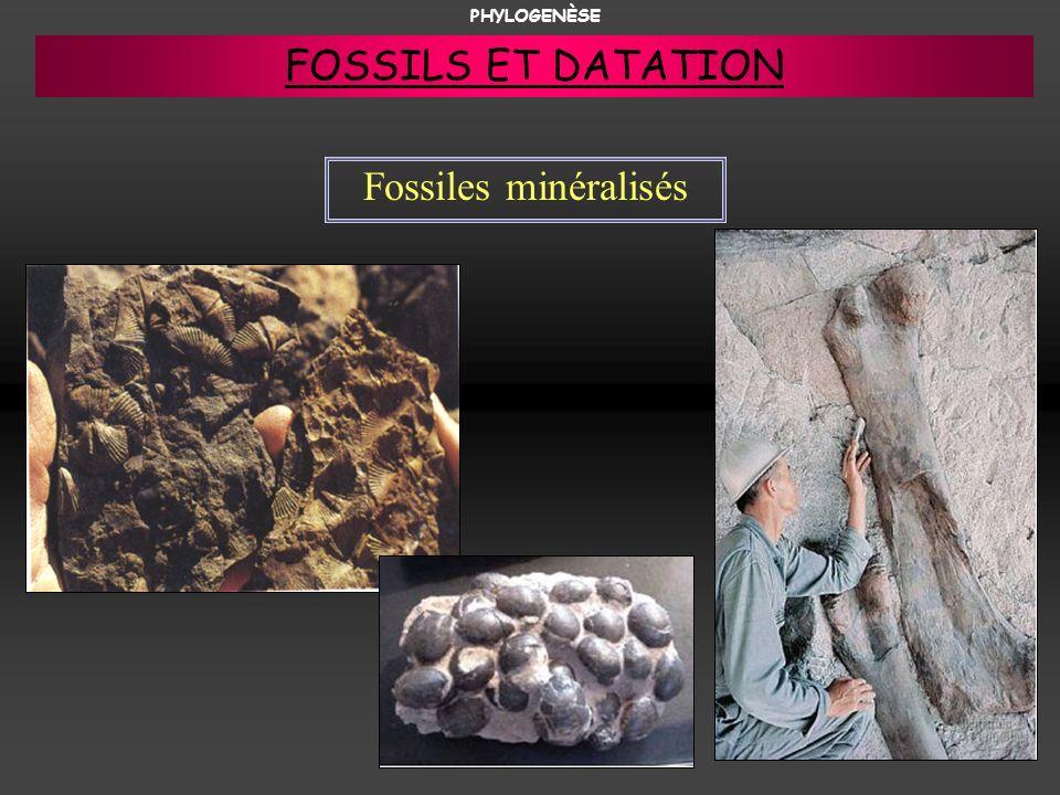 Fossiles minéralisés PHYLOGENÈSE FOSSILS ET DATATION