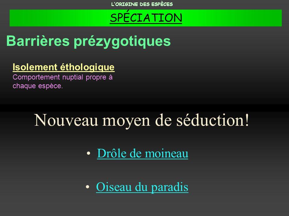 Un exemple du principe de la classification LORIGINE DES ESPÈCES
