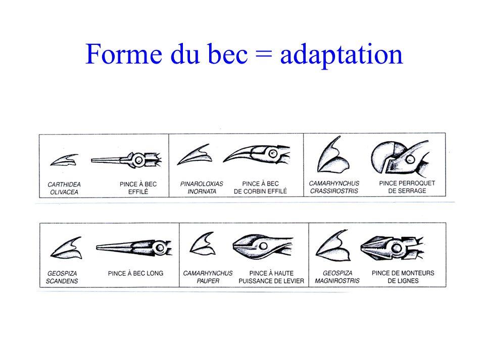 Forme du bec = adaptation