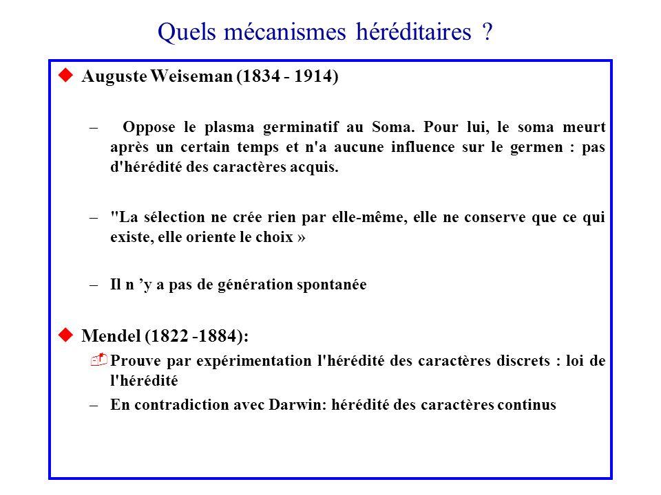 Quels mécanismes héréditaires ? uAuguste Weiseman (1834 - 1914) –Oppose le plasma germinatif au Soma. Pour lui, le soma meurt après un certain temps e