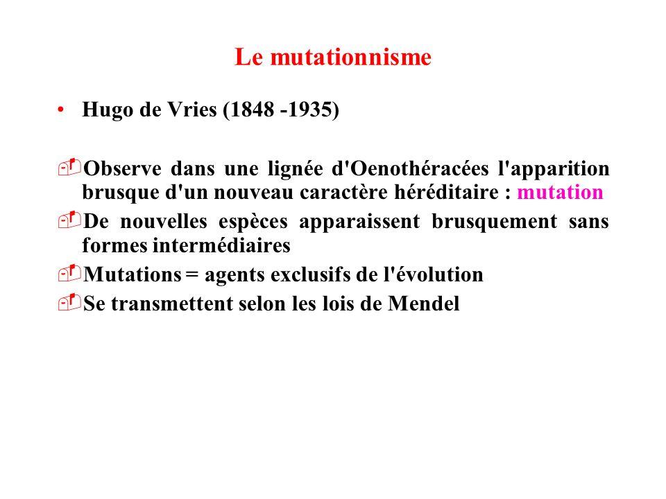 Le mutationnisme Hugo de Vries (1848 -1935) -Observe dans une lignée d'Oenothéracées l'apparition brusque d'un nouveau caractère héréditaire : mutatio