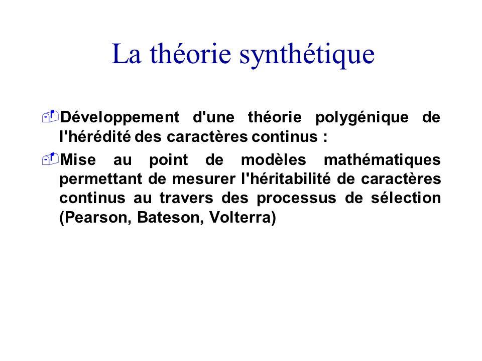 La théorie synthétique Développement d'une théorie polygénique de l'hérédité des caractères continus : Mise au point de modèles mathématiques permetta