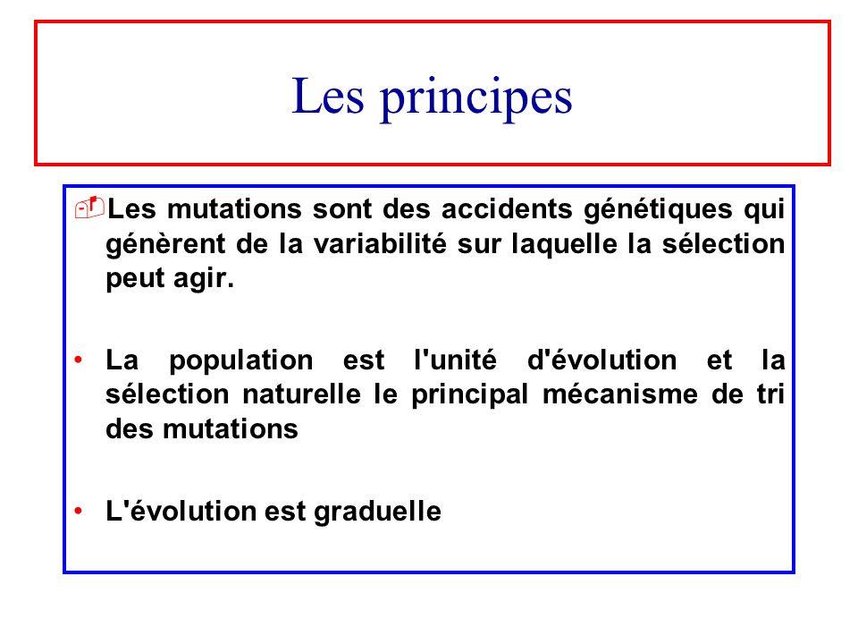 Les principes Les mutations sont des accidents génétiques qui génèrent de la variabilité sur laquelle la sélection peut agir. La population est l'unit