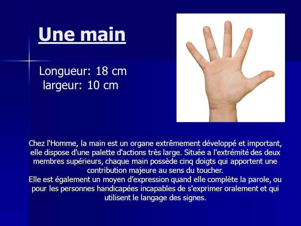 Une main Chez lHomme, la main est un organe extrêmement développé et important, elle dispose d'une palette d'actions très large. Située a l'extrémité