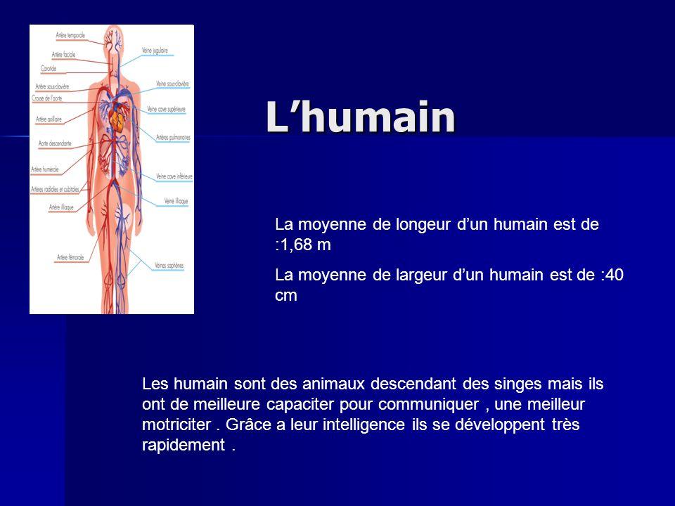 Lhumain La moyenne de longeur dun humain est de :1,68 m La moyenne de largeur dun humain est de :40 cm Les humain sont des animaux descendant des sing