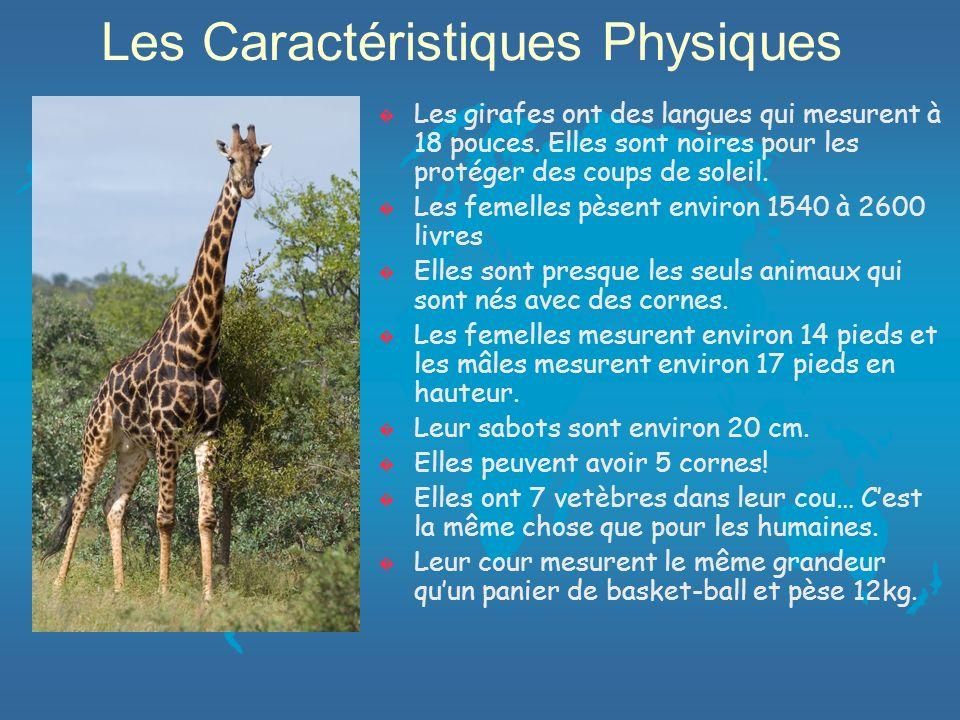 Savais-Tu??.Le mot giraffa veut dire celle qui marche promptement.