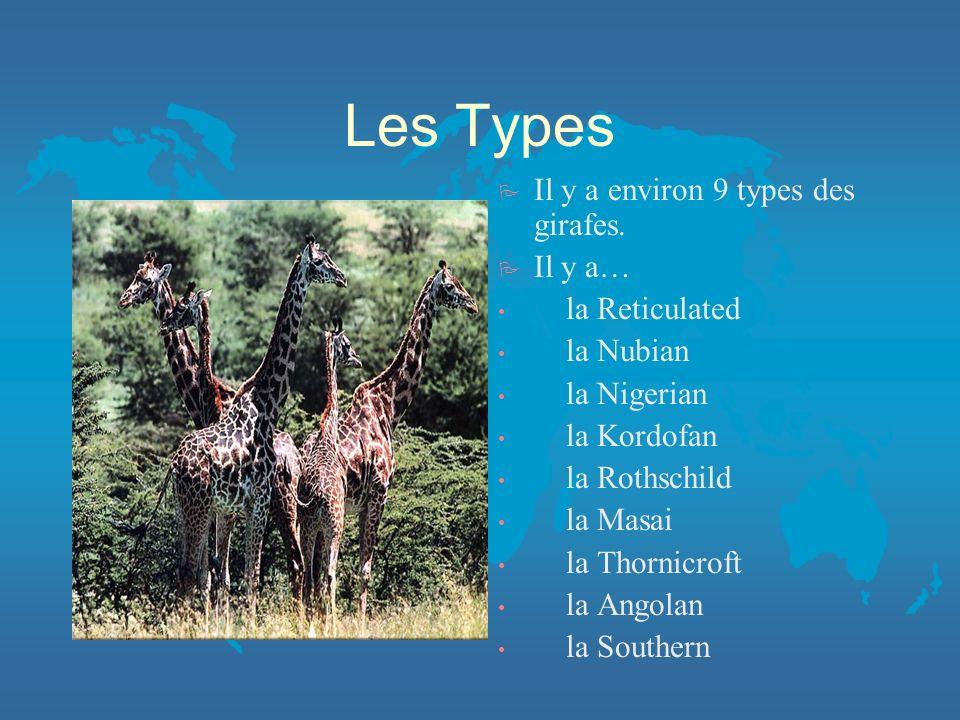 Les Types P Il y a environ 9 types des girafes.