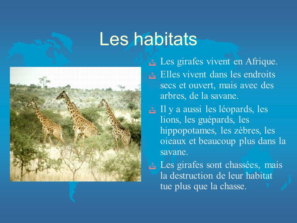 Les habitats Les girafes vivent en Afrique.