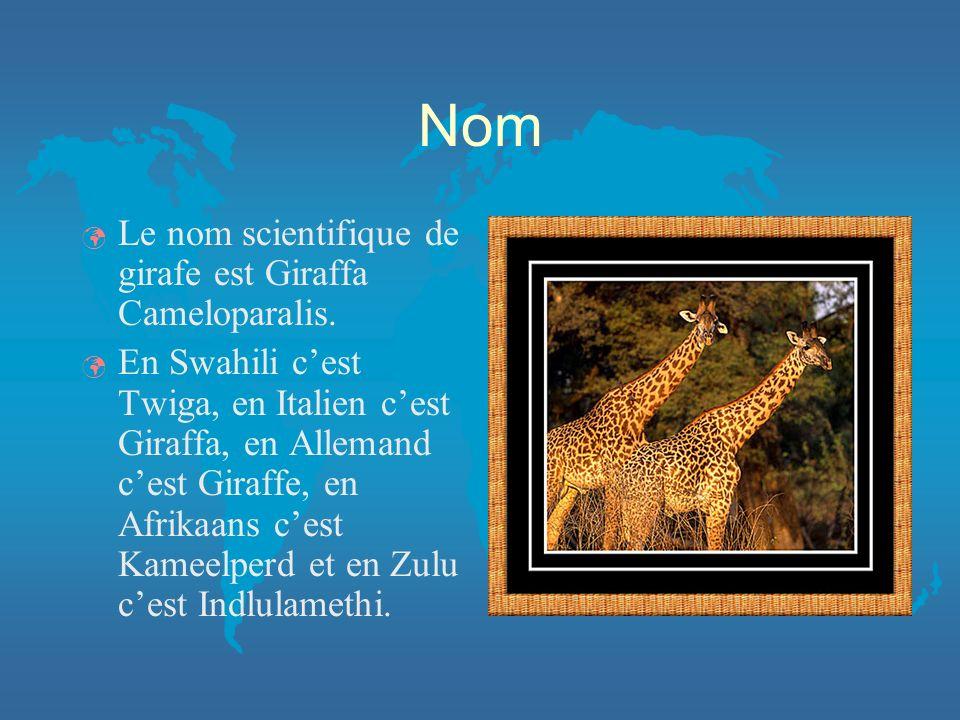 Nom Le nom scientifique de girafe est Giraffa Cameloparalis.