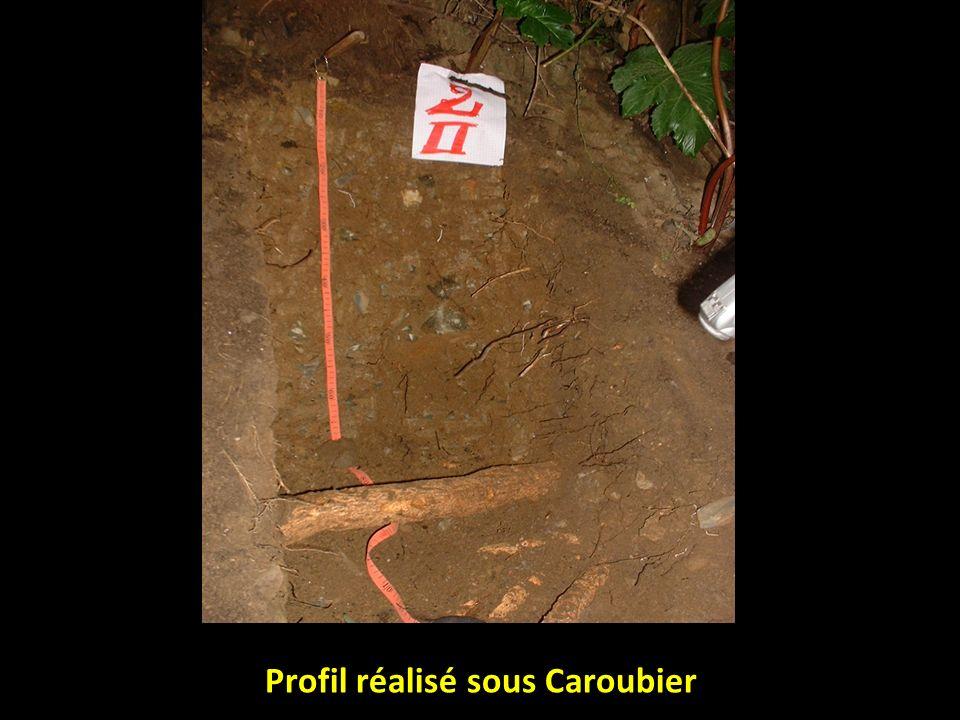 profils Profondeur (cm) Calcaire totalCalcaire actif Calcaire total/calcaire actif Profil t 0-10 10-30 30-60 8,22 10,16 10,66 2,5 3,5 4 0,3 0,34 0,38 Profil 1 0-10 10-40 40-60 10,43 9,18 9,16 3,75 2,5 3,5 0,36 0,27 0,38 Profil 2 0-20 20-30 30-60 10 8,3 8,75 4 4,25 1,8 0,4 0,51 0,21 Profil 3 0-15 15-35 35-60 10,12 11,29 8,75 1,63 1,75 1,5 0,16 0,17 Profil 40-15 15-35 35-60 8,12 8,95 9,04 0,5 1,25 1,41 0,06 0,14 0,15 Résultats des mesures du calcaire total et du calcaire actif
