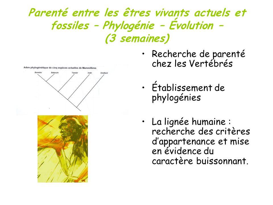 Parenté entre les êtres vivants actuels et fossiles – Phylogénie – Évolution – (3 semaines) Recherche de parenté chez les Vertébrés Établissement de p