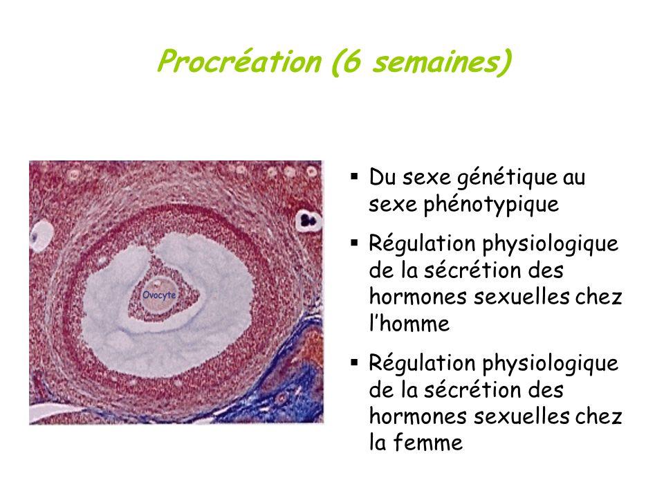 Procréation (6 semaines) Du sexe génétique au sexe phénotypique Régulation physiologique de la sécrétion des hormones sexuelles chez lhomme Régulation