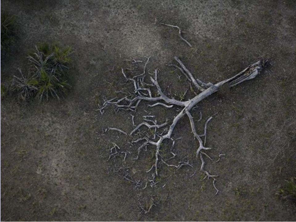 Terre fragile Terre salie Les arbres se meurent Sous les pluies acides Les nuages pleurent Des gouttes de mort
