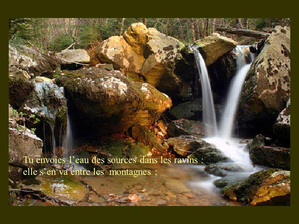 Tu envoies leau des sources dans les ravins : elle sen va entre les montagnes ;