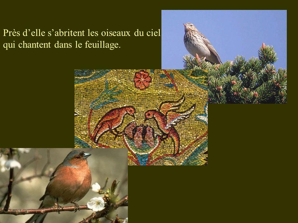 Près delle sabritent les oiseaux du ciel qui chantent dans le feuillage.