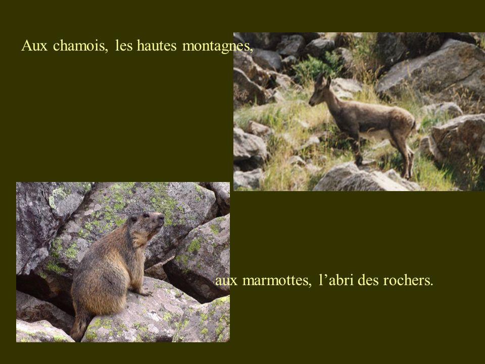Aux chamois, les hautes montagnes, aux marmottes, labri des rochers.