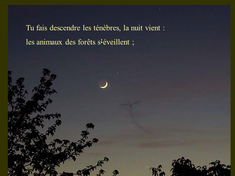 Tu fais descendre les ténèbres, la nuit vient : les animaux des forêts séveillent ;
