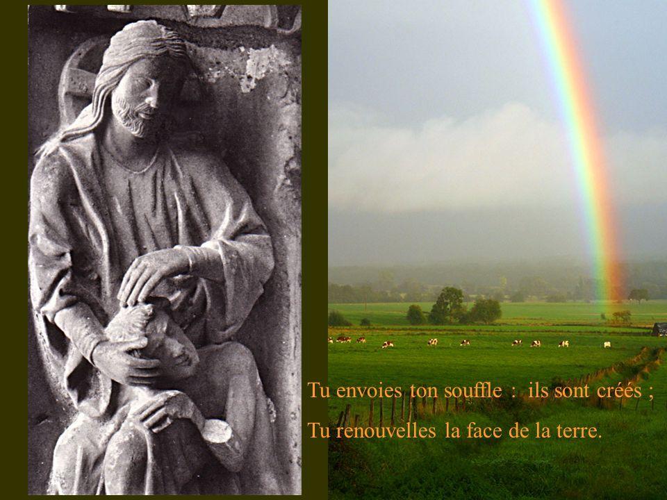 Tu envoies ton souffle : ils sont créés ; Tu renouvelles la face de la terre.