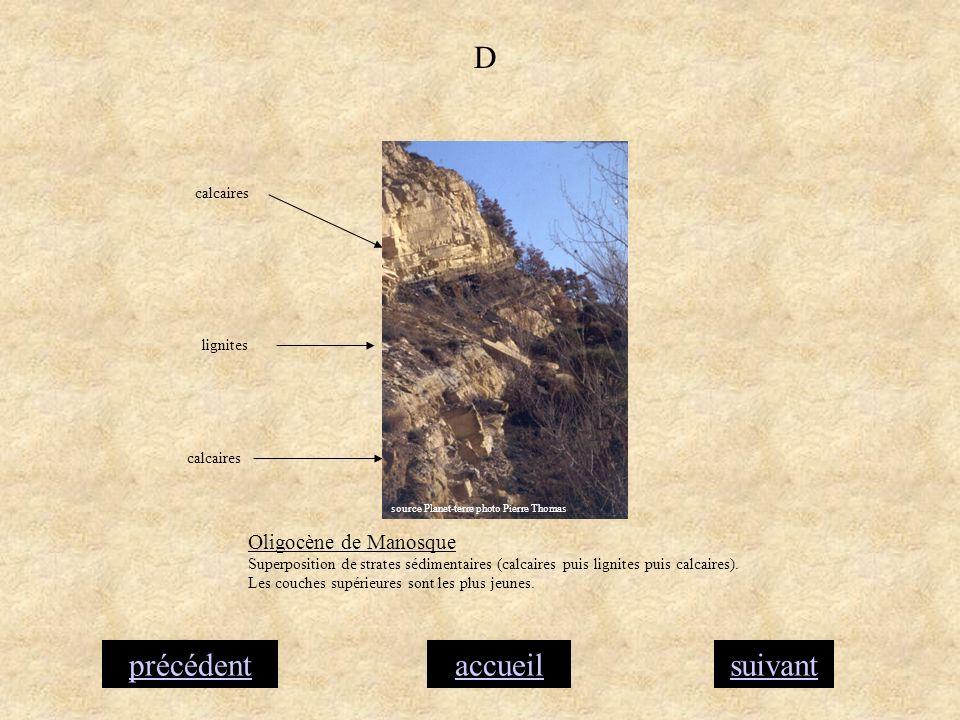 accueilsuivantprécédent D lignites calcaires Oligocène de Manosque Superposition de strates sédimentaires (calcaires puis lignites puis calcaires). Le