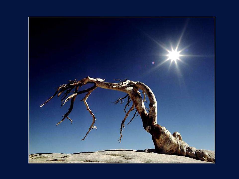 Entendez-vous le chant plaintif des troncs desséchés par la morsure du vent brûlant et du soleil torride dans les déserts?