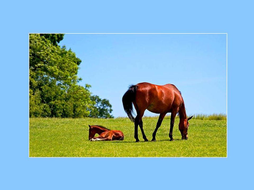 Entendez-vous le chant très doux des animaux au pâturage, dans les prés et les vallons qui regorgent d'herbe tendre et de trèfle odorant?